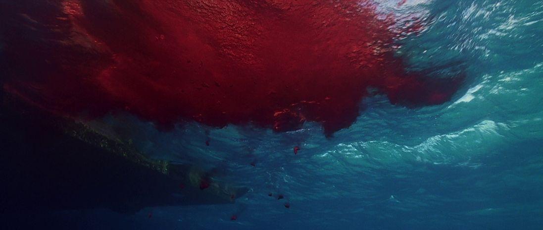 Galerie Les dents de la mer 4: La Revanche 8