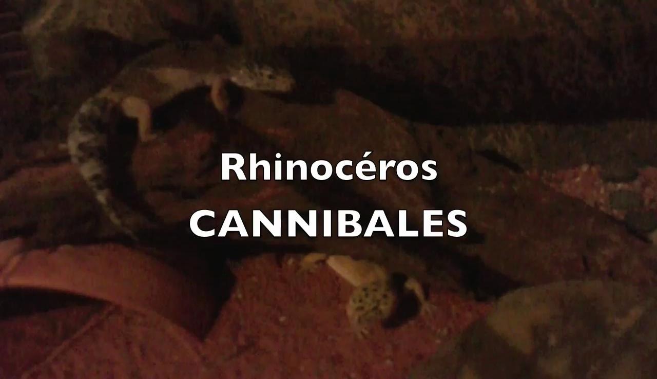 Galerie Rhinocéros Cannibales 2 2