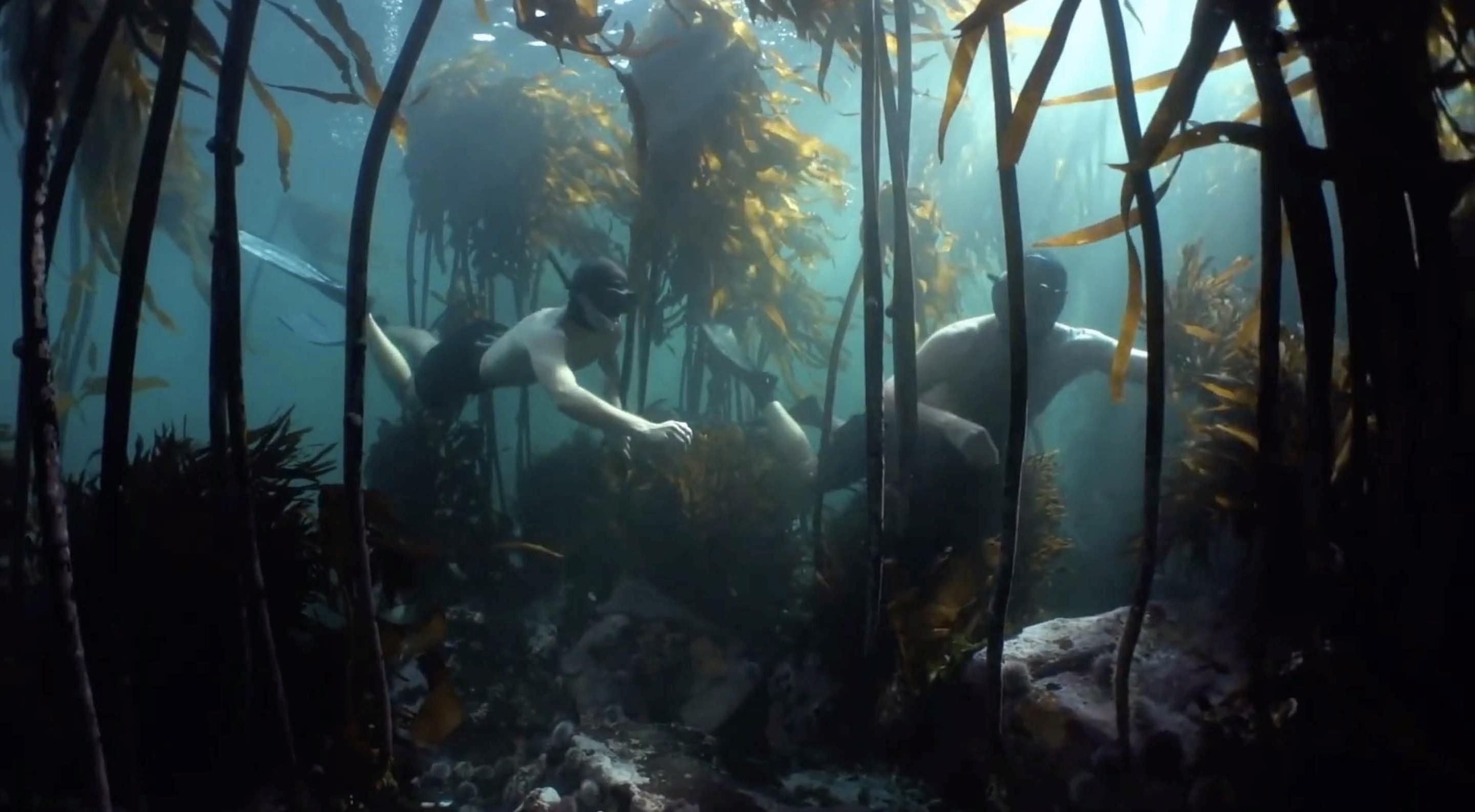 Galerie La Sagesse de la pieuvre 2